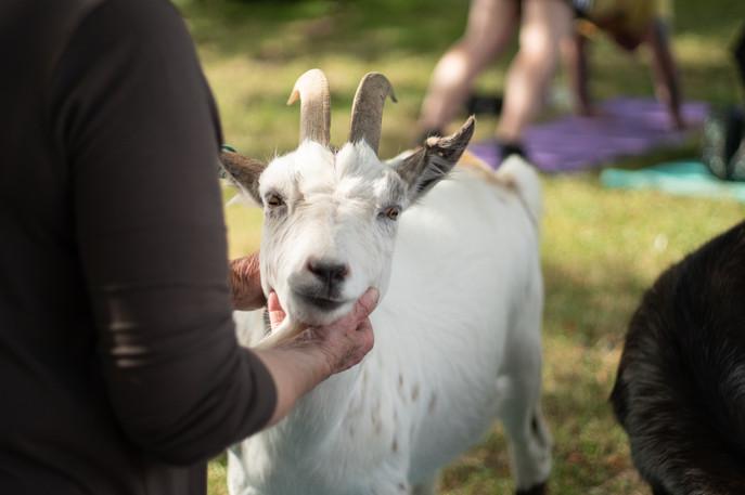 Goat Yoga-132.jpg