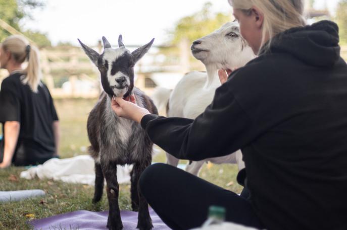 Goat Yoga-175.jpg