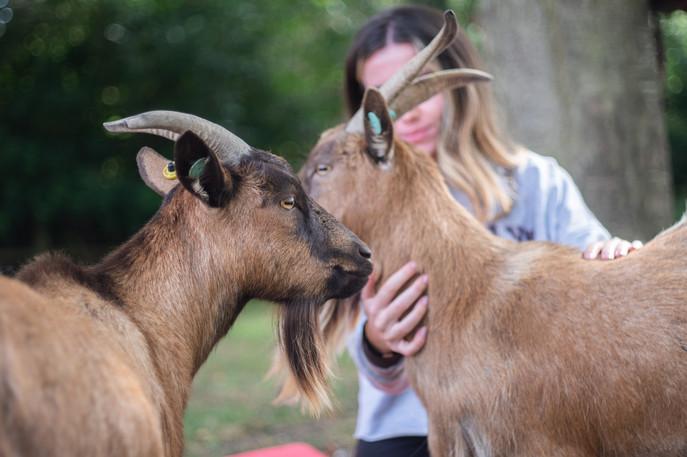 Goat Yoga-136.jpg