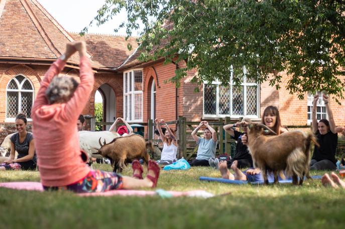 Goat Yoga-163.jpg