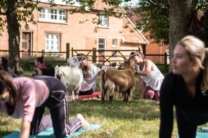 Goat Yoga-145.jpg