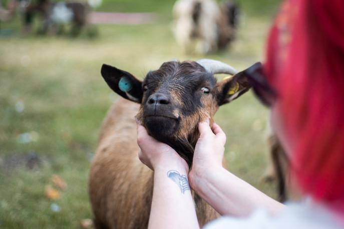 Goat Yoga-093.jpg
