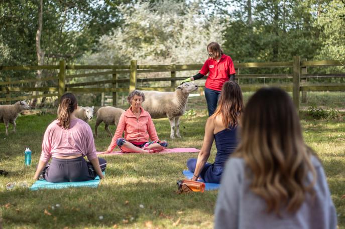 Goat Yoga-176.jpg