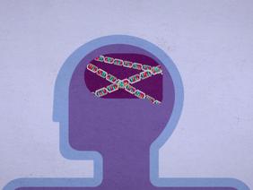Autism genetics, explained