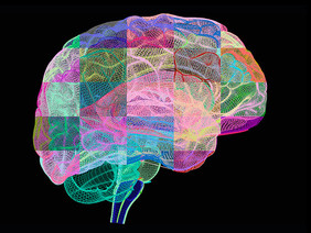 BRAIN ALLERGIES: How Sensitivities to Food and Other Substances Can Effect the Mind