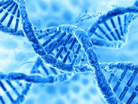 The Genetics of Autism