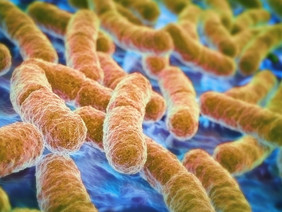 Treating autism by targeting the gut