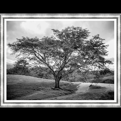 A Single Tree I