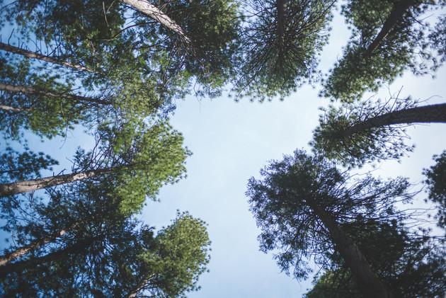 TREE COVERAGE