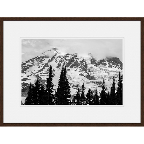 Mt. Rainier Treetops