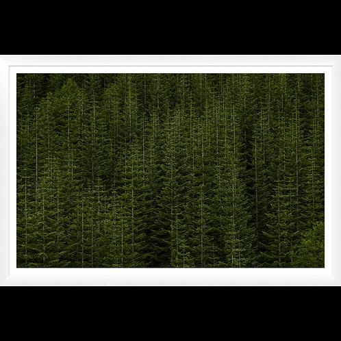 Among Static Pines