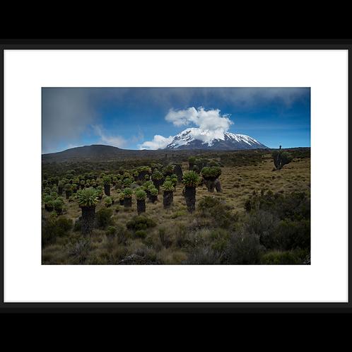 Mount Kilimanjaro I