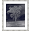 Thumbnail: A Single Duotone Tree I