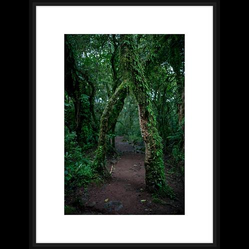 Mossy Rain Forest I