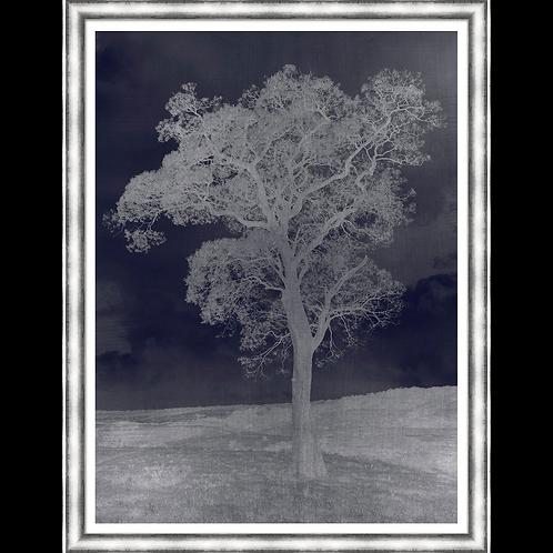 A Single Duotone Tree I