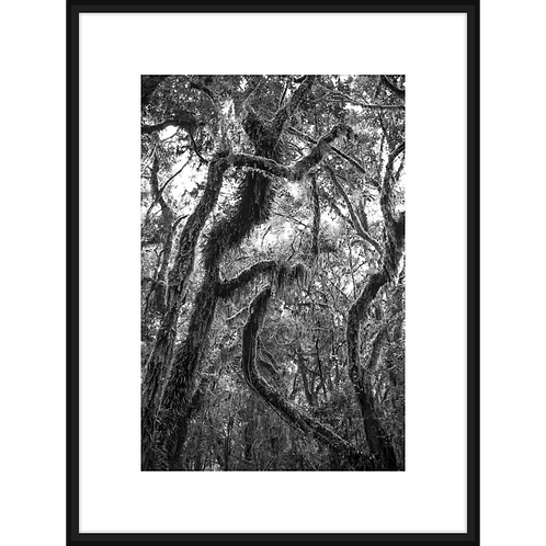 Mossy Rain Forest II