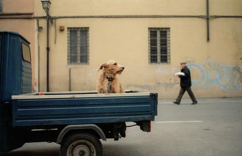 STOIC DOG