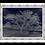 Thumbnail: A Single Duotone Tree II