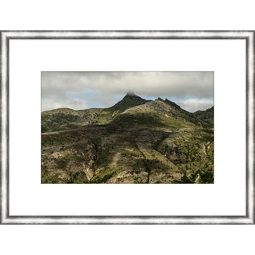 Mt. St. Helens Blast Zone