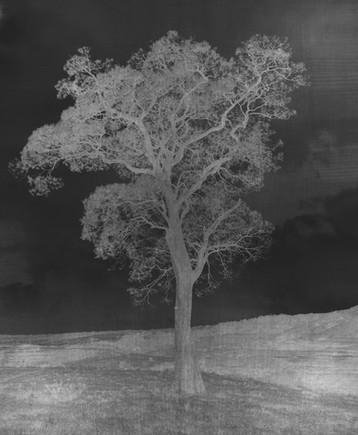 RUSTIC TREE
