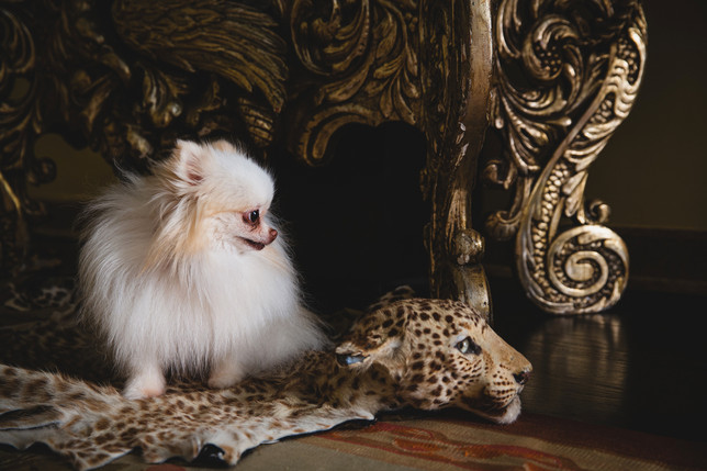 DOG & CHEETAH