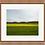 Thumbnail: Biltmore Canola Fields II