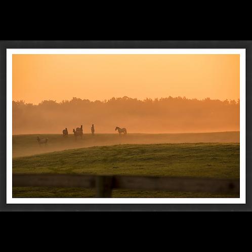 Meadow Sunrise II
