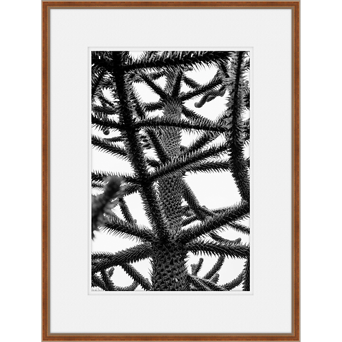 Structural Evergreen in BW