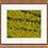 Thumbnail: Biltmore Canola Fields