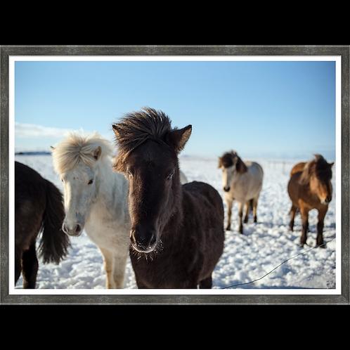 Yakut I