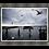 Thumbnail: Gull Gathering