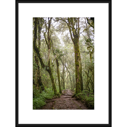 Mossy Rain Forest III