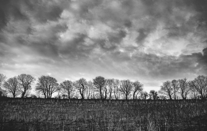 IRISH TREE LINE