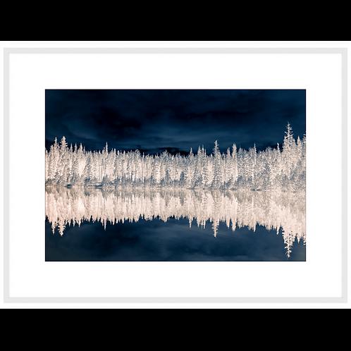 Treescape & Reflection in Dark & Light