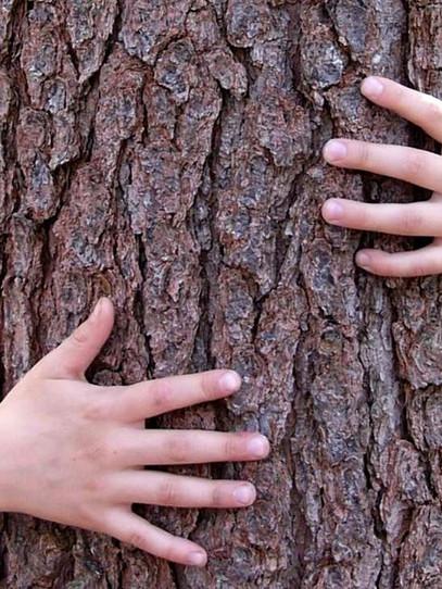 مليون شجرة حب لسوريا 😍🌳🇸🇾