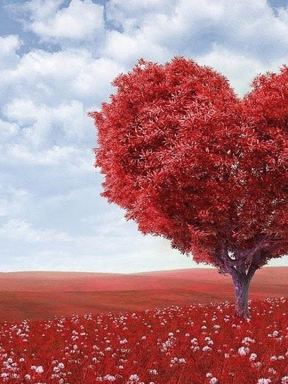 هذه هي أفكارنا لعيد الحب...😍