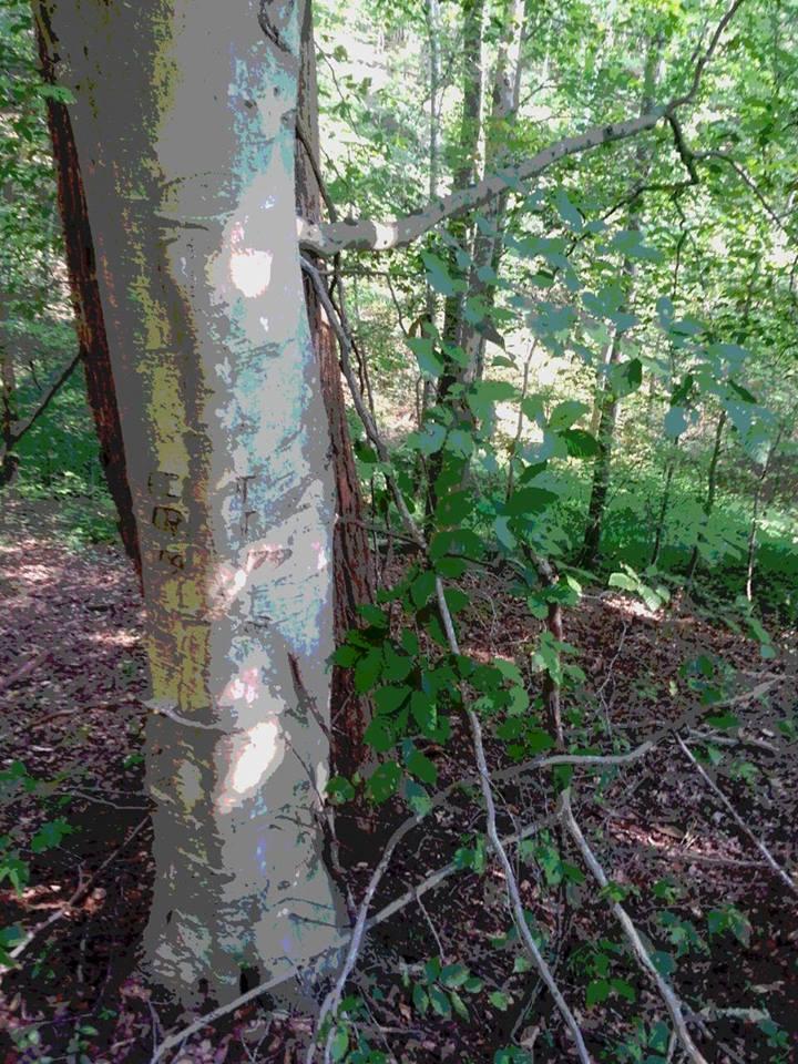 Initial Tree