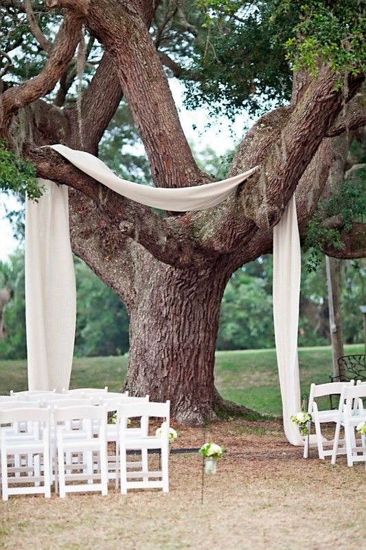 Wedding drapped tree.jpg