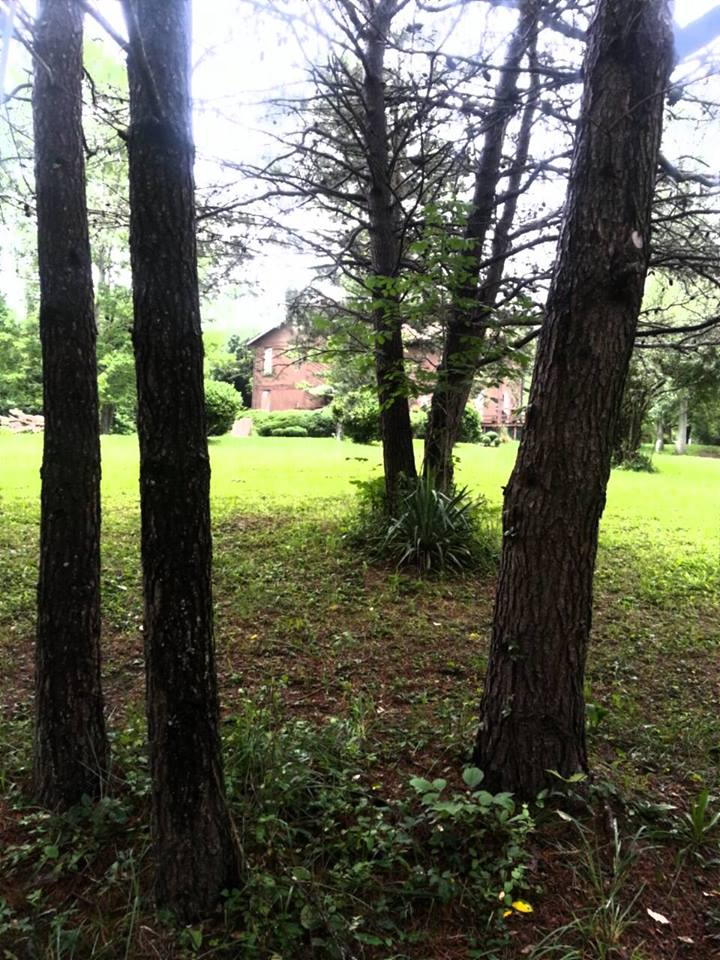 Wedding Timberline House Trees.jpg