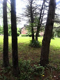 Old Woodland Homestead Shade Grove