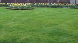 Lawn View