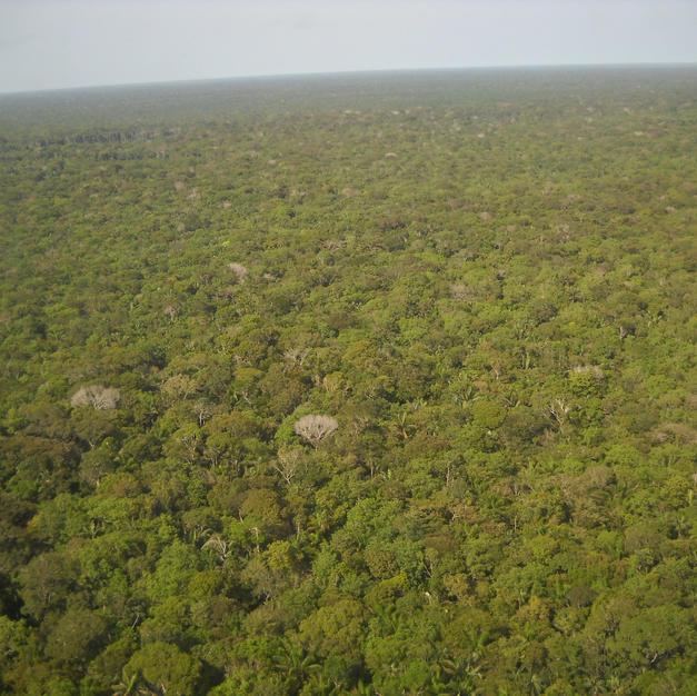 Proyecto de gestion sostenible del paisaje amazonico