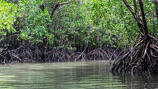 mangroves-5205415_1920.jpg