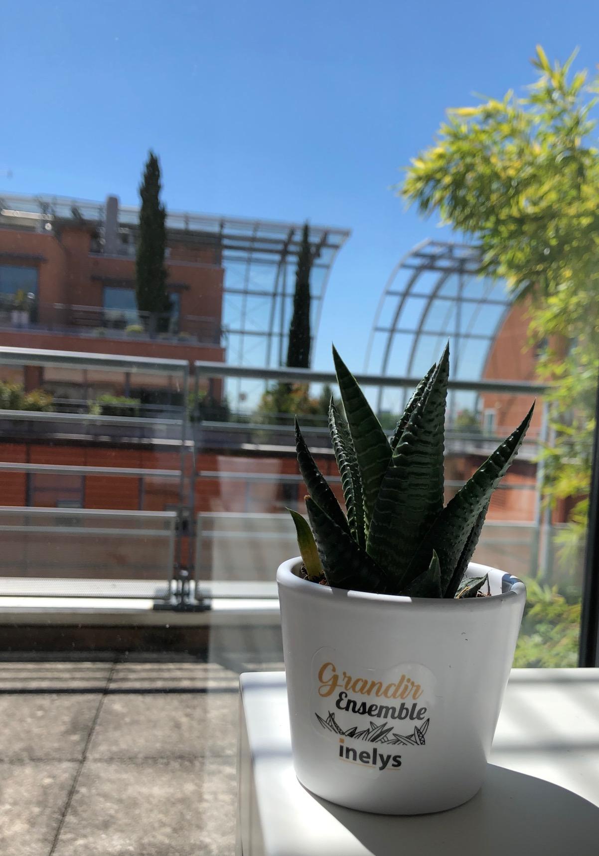 Plantes Goodies INELYS