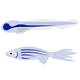 diag'ncell-zebrafish.png