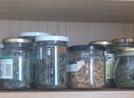 10 praktische Möglichkeiten sich auf die kommende Kräutersaison vorzubereiten