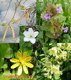 Frühlingskräuter