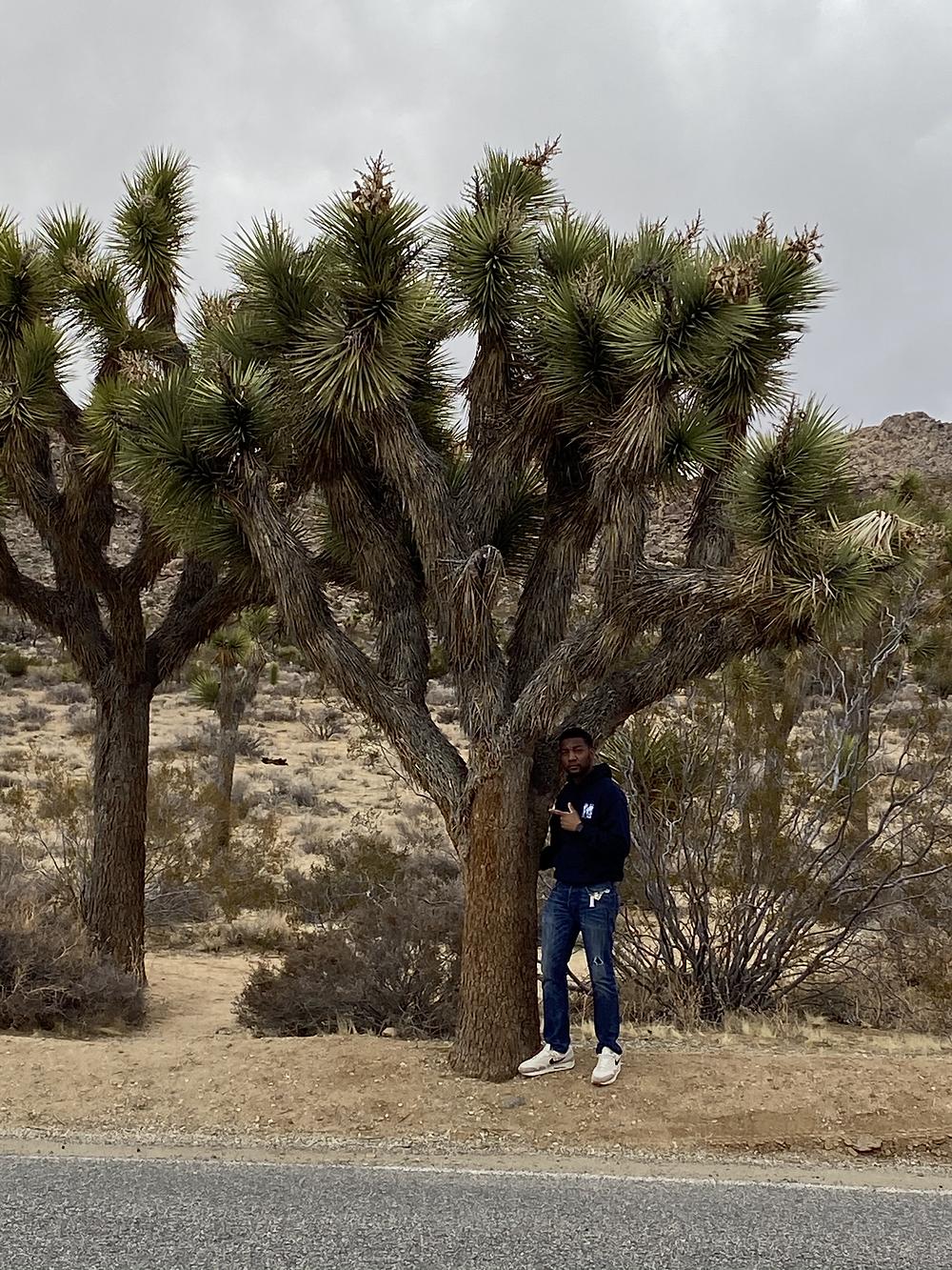 The Novaturient Nomad hugging a Joshua Tree