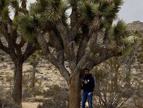 Joshua Tree: Where Two Deserts Meet