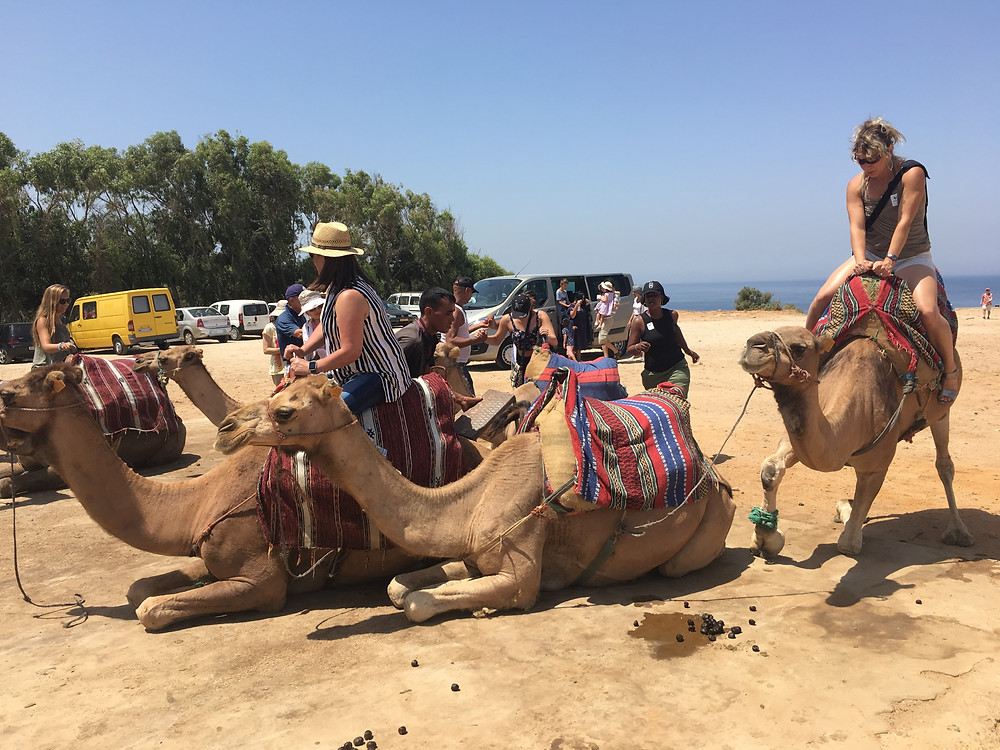 Camel riding in Tangier